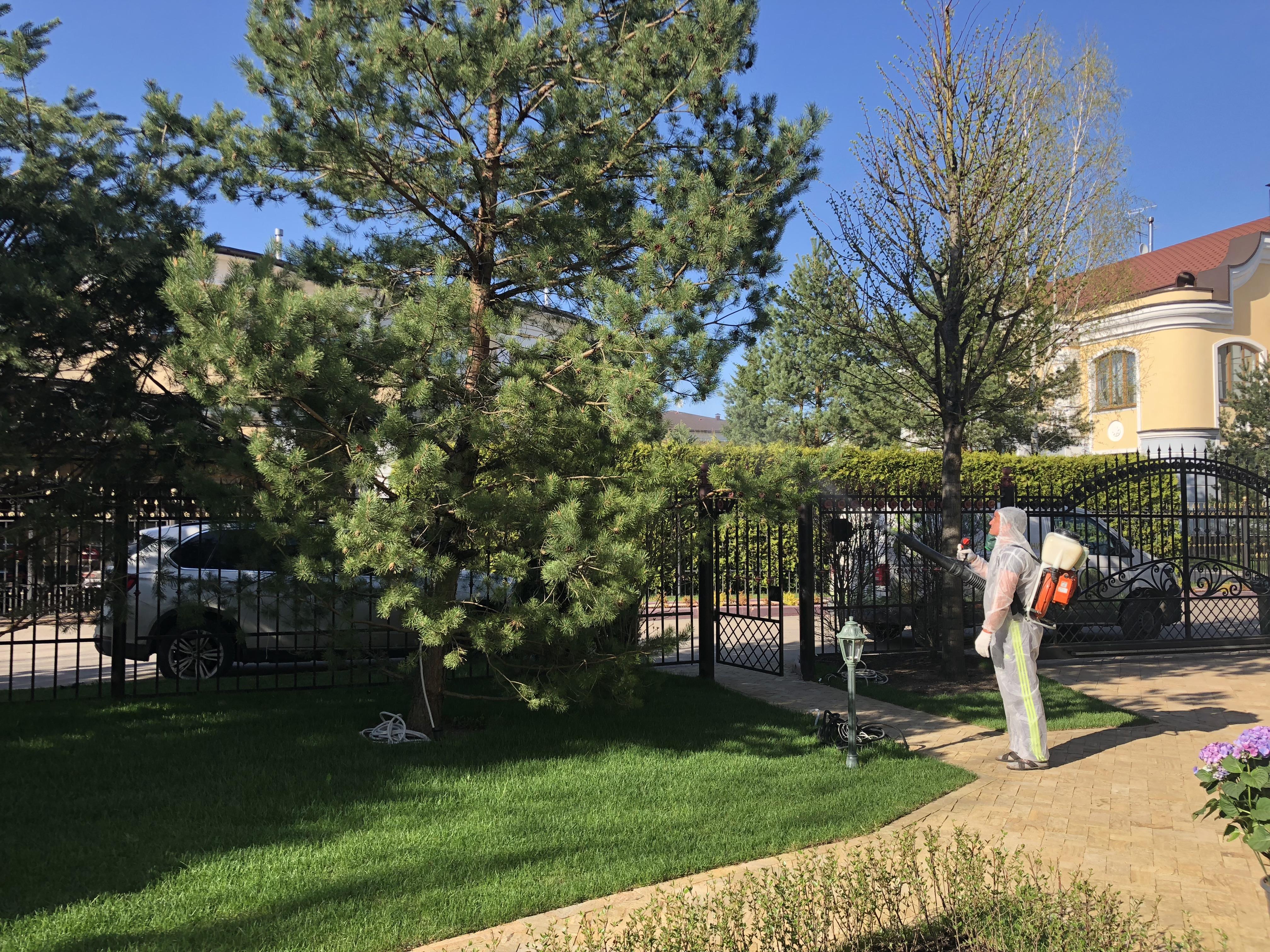 Комплексный уход за садом: опрыскивание